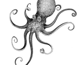 Print - Graphite Drawing - Octopus - 8x10