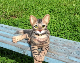 Bengal cat .