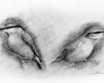 Printable drawing of two nuthatches. Wildlife drawing for instant download by Thomas Harrison