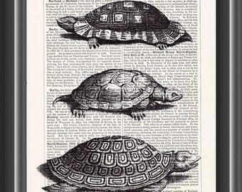 Turtles terrapins tortoises print vintage dictionary art home decor wall art #161