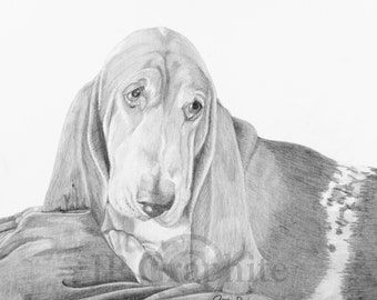 Basset Hound dog graphite drawing pet portrait archival giclee print signed by artist Jessie Perkins