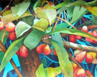 Mountain Apples 8x10 Giclee