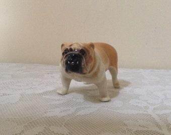 Antique small British Bulldog, a charming fellow