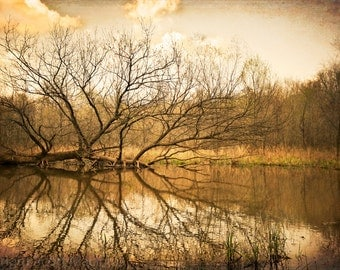 Fallen FREE SHIPPING Vintage Antique Rustic Home Decor Wall Art Fine Photograph Nature Tree Fall Brown Orange Roswell Georgia Reflection