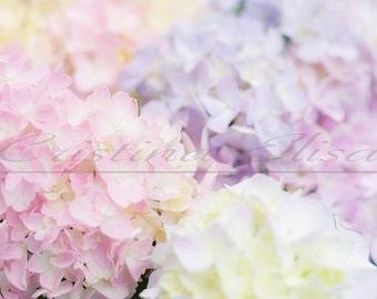 Styled Stock Photography | Digital Background | Pink & Purple Hydrangeas | Branding or Banner | Romantic Dreamy Soft Focus