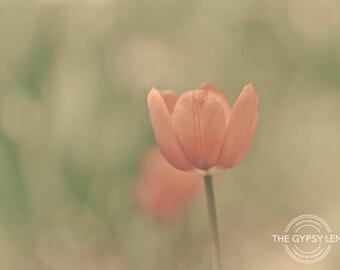 NC-YRBG-039- Photo Notecard - Colorado - Flower