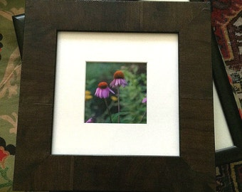 Framed purple cone flower