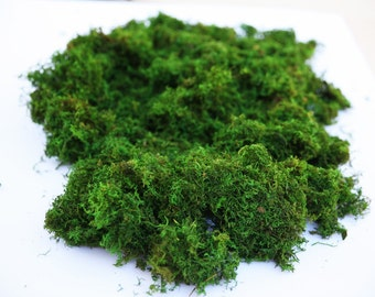 2.5 lb Bulk Preserved Loose Forest Moss in Spring Green