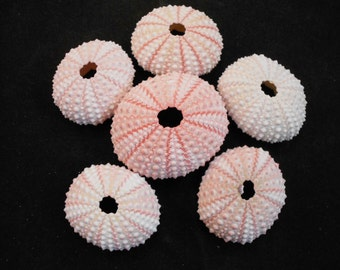 Set of 6 Pink Sea Urchin Shells Crafts Beach Nautical Decor Airplants
