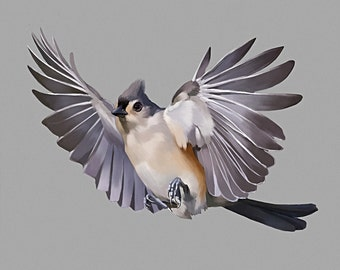 Tufted Titmouse Postcard 130lb card stock