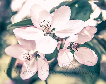 Digital Download Photography, Instant Download, Fine Art Photography, Macro Photography, Nature Photography, Printable Art, Wall Art