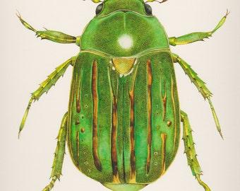 Glorious Scarab Beetle Print