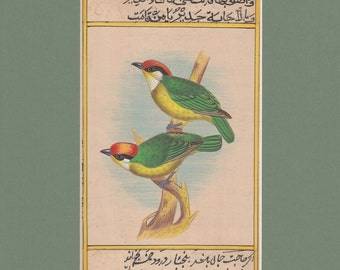 Pair of Barbets watercolour original Indian miniature painting