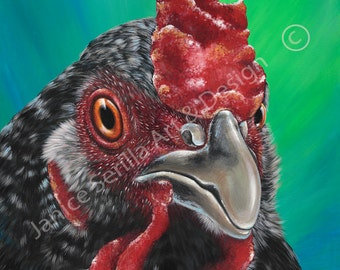Artwork print Barred Plymouth Rock Chicken