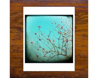 8x8 Print [JCP-057] - Coral Tree 1