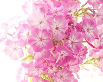 Floral Wall Art,  Pink Phlox Macro Photography, Flower Photography, 8 x 10 Print
