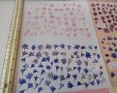 Choose your Corn Flower, Bachelor Button Flower Petals Pressed in Alaska 75 plus pcs. 117 FL