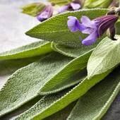 Anti Fungal Blend Infused Herbal Oil