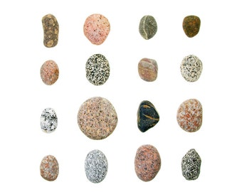 Beachcombing series No.43 (8x10 photograph) pink granite, beach stones, Maine, beach art, coastal decor