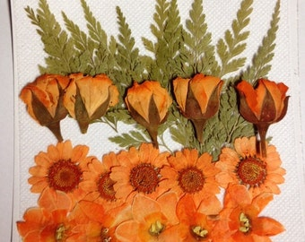 Real Pressed flowers - Designer Pack - Orange