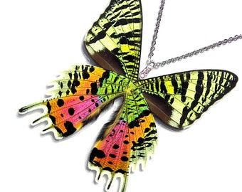 Real Butterfly Wing Necklace / Pendant (WHOLE Urania Ripheus Sunset Moth - W001)