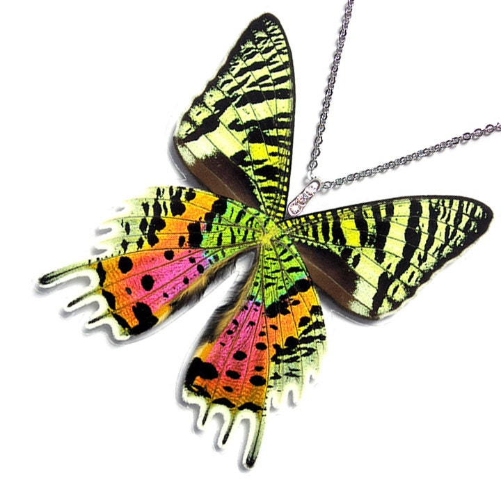 Real Butterfly Wing Necklace / Pendant WHOLE Urania Ripheus