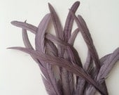 BELLISSIMA TAIL FEATHERS Loose / Satin Grey with Fig Highlights / 179