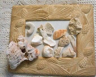 CORAL CONCH & Sea Shell Lot, Atlantic Ocean Washed Tumbled St Kitts Beach Memory, 13 Natural Organic Shapes DIY Collage Aquarium Terrarium 2