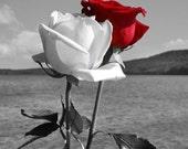 Passion Rose Perfume,  Roll On Perfume, Perfume Oil, Cologne, Vegan