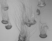 Jellyfish Grace Photo