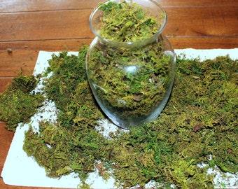 Moss-Preserved Sheet Moss-Shredded fern moss-Fairy Grass-REAL moss shreds-Floral supplies-Wedding supplies