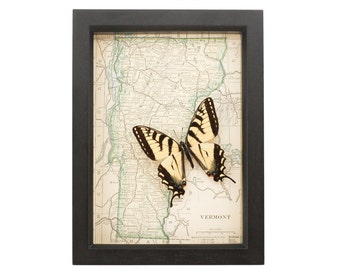 Old Vintage Map Vermont with Tiger Swallowtail Butterfly