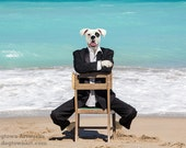 Life is a Beach, large original photograph of handsome white boxer dog dressed in a tuxedo at the beach