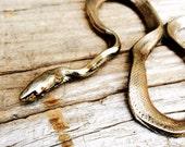 Colubrid Snake Pendant - Snake Necklace