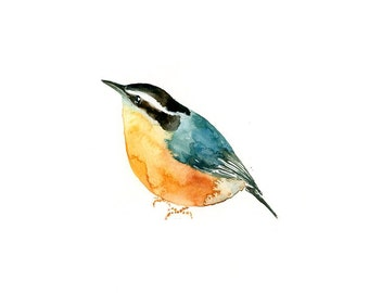 NUTHATCH Original watercolor painting 10x8inch