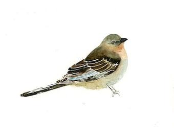 MOCKING BIRD Original watercolor painting 10x8inch