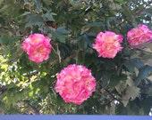 Pom Pom Silk Blush Pink Wedding Pomander Set of 10