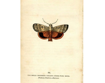 1832 MOTH BUTTERFLY INSECT antique print original hand coloured engraving