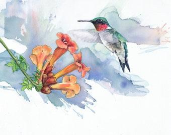 Hummingbird painting - Limited Edition Giclee Print of Original Watercolor Painting - Bird Art