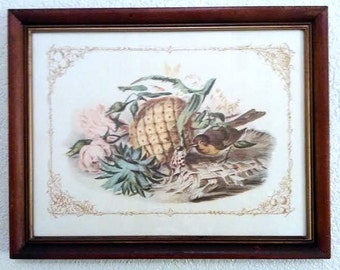 Vintage-Framed Print-Bird-Butterflies-Pineapple-E.A. RIBA CO. INC.-Brooklyn N.Y.-Style No. 454
