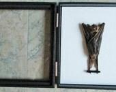 Sleeping Wolf Bat in Glass Top Case - SHIP FREE