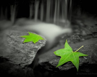 nature photography, spring photography, leaves, maple leaves, water, rocks, zen photography, river, calm, tranquil, zen art