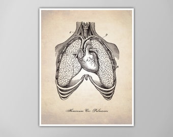 Human Heart and Lungs Art Print, Medical Cross Section Illustration, Medical Drawings, Heart and Lungs Art Print, Heart and Lungs Poster