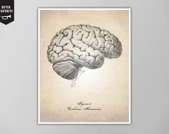 Human Brain Art Print, Brain Illustration Art Print, Medical Illustration Art Print, Human Anatomy Brain Illustration, Human Anatomy Print