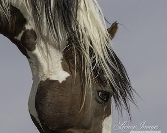Picasso's Eye - Fine Art Wild Horse Photograph - Wild Horse - Picasso - Sand Wash Basin - Fine Art Print