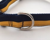 Blue and Gold Adjustable Dog Collar