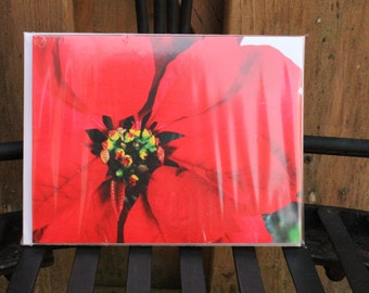 Poinsettia Set of 6 Blank Notecards