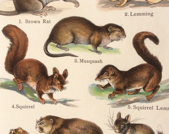 Antique 1909 BEAVER RAT HAMSTER Bookplate Chromolithograph Print