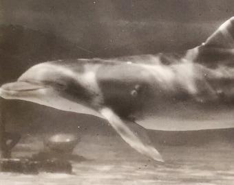 SALE Rare Original Vintage Underwater Photograph Dreamy Dolphins