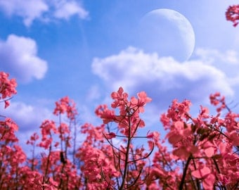Moon Flower Photography Print